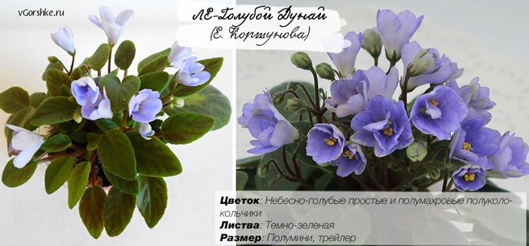 ЛЕ-Голубой Дунай, форма цветка - колокольчик