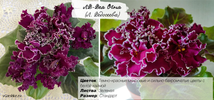 ЛФ-Фея Огня (Лилия Федосеева)