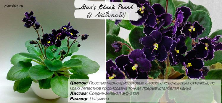 С цветами анютины глазки, Mac's Black Pearl (G.McDonald)