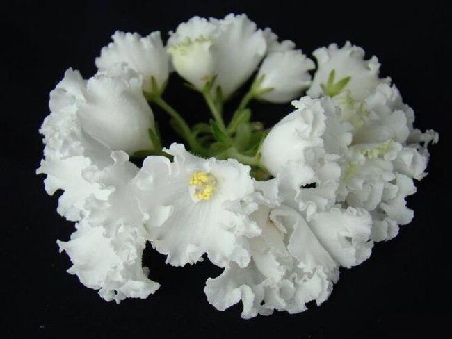 НК-Марш Мендельсона, форма цветка чаша