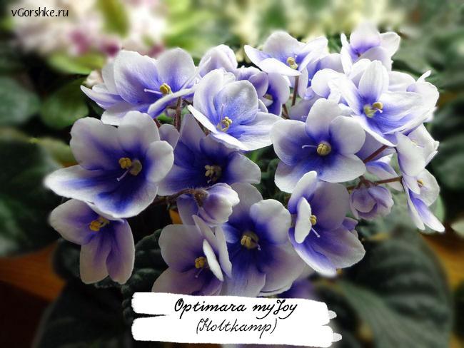 Optimara myJoy (Holtkamp), двухцветная, расцветка Глазок