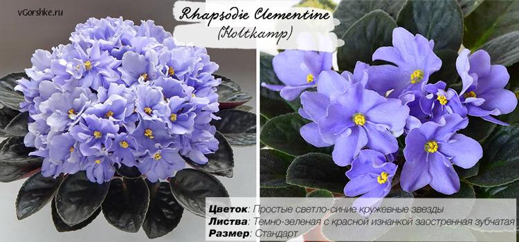 Rhapsodie Clementine (Holtkamp) одноцветная светло-синяя