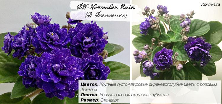 Dn-November Rain, очень махровые цветы