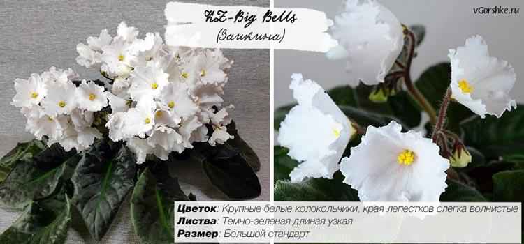 KZ-Big Bells