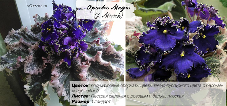 Apache Magic (J.Munk) фиолетовая