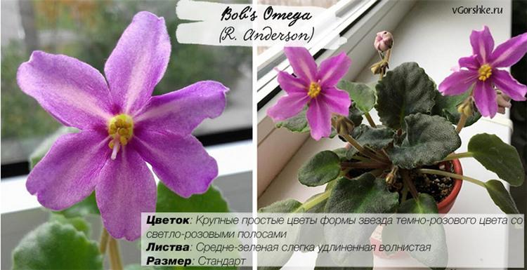 Bob's Omega (R. Anderson), название на русском Омега