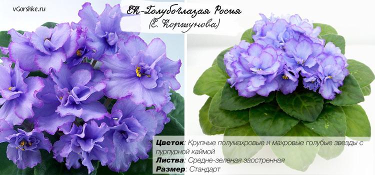 ЕК-Голубоглазая Россия, фото