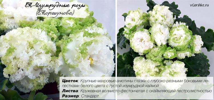 ЕК-Изумрудные розы, фото