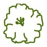 Форма цветка фиалки Чаша