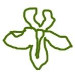 Форма цветка фиалки Оса