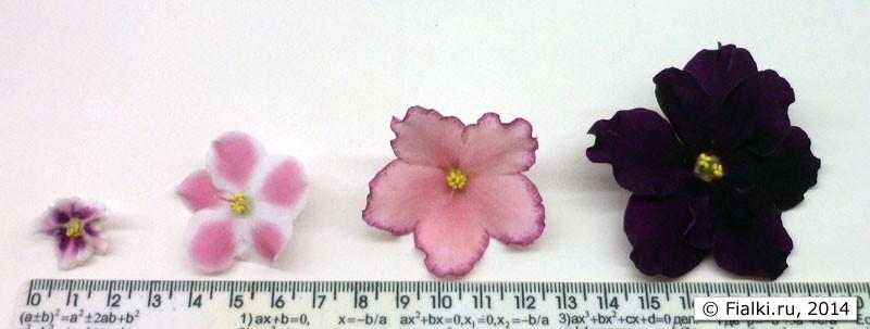 Виды фиалок по размеру цветка