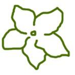Форма цветка фиалки Звезда