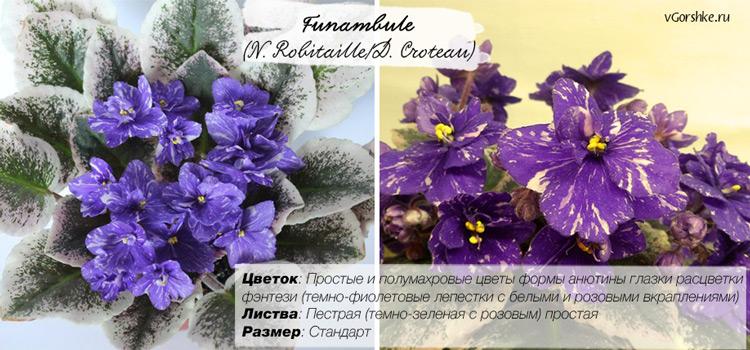 Неприхотливая в уходе, Funambule (N. Robitaille/D. Croteau)