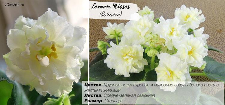 Lemon Kisses, фото