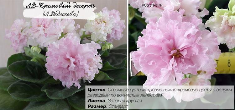 ЛФ-Кремовый десерт