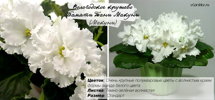 Вологодское кружево / Памяти Тани Макуни (Макуни)
