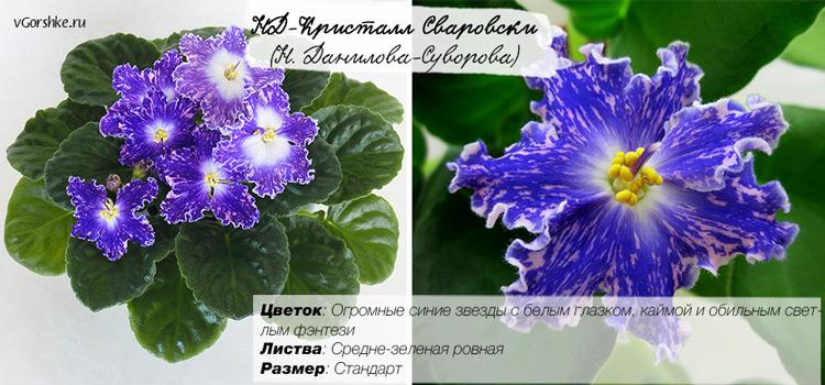 НД-Кристалл Сваровски синецветковая