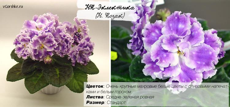 К-Эклектика, фото