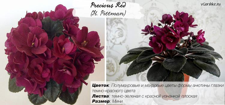 Precious Red (H. Pittman) с полумахровыми цветами