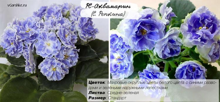 РС-Аквамарин, фото