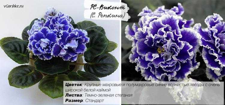 РС-Виконт с синими цветами