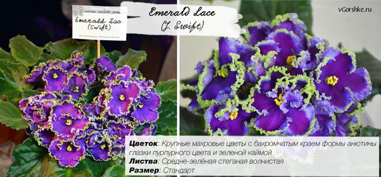 Emerald Lace (J. Swift)